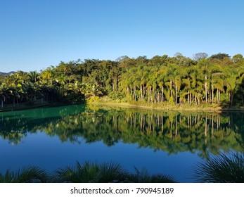 Vegetation by the lake, Inhotim - Brazil