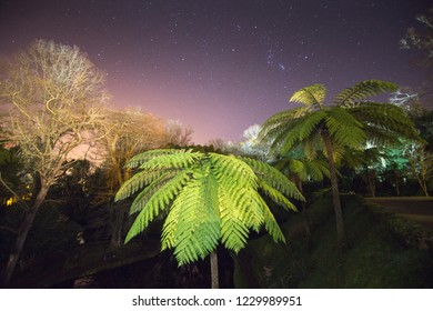 Vegetation by night  in Terra Nostra park Furnas Sao Miguel island Azores Portugal