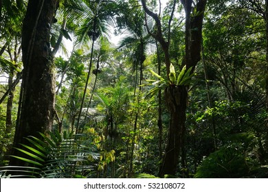 Vegetation in a forest of New Caledonia, Grande Terre island, south Pacific