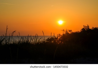 Vegetation in front of a beautiful sunset by the beach at the swedish island Gotland