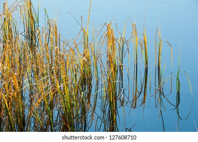 Vegetation in the lake