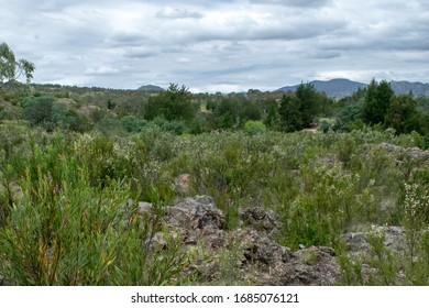 Vegetation with mountain in the distance