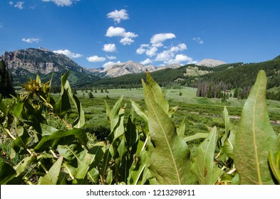 Vegetation and mule ears in foreground with Rocky Mountains in the background in Jackson Wyoming in the Bridger Teton National Forest near Granite Creek Hot Springs
