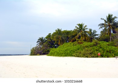 Vegetation on the beach in Maldives