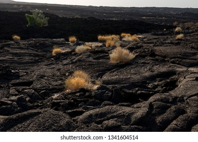Vegetation on the lava rock, Erta Ale volcano, Ethiopia