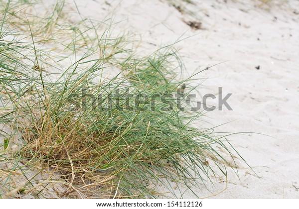 Vegetation on the sand of coastal dunes