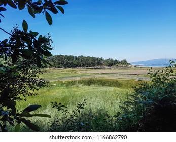 Vegetation of Rial's marsh in Vilanova de Arousa