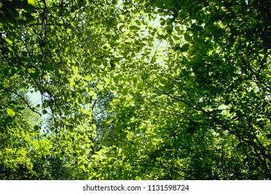 Vegetation at the river Danube. River and swamp vegetation in the Danube Delta