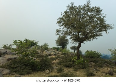 Vegetation and stones of Govardhan Hill, India.