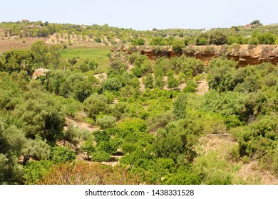 Vegetation in Valley of the Temples, Agrigento, Sicily