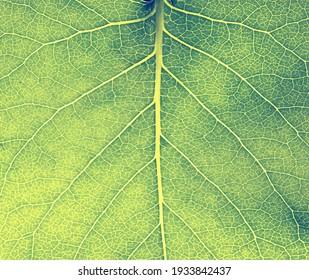 Vegetative background. Close up leaf texture