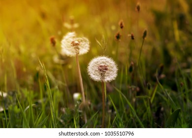 Vegetative background. Different, spring, field grasses grow on a meadow