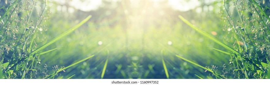 Vegetative background with wildflowers, panorama of a sunny meadow, macro, bokeh background, blur