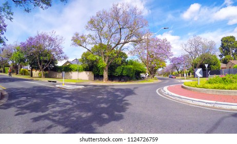 Vehicle POV driving along beautiful tree canopy lined streets with purple Jacaranda trees, taken in Adelaide, South Australia.