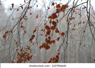 veil of branches with some last brown leaves