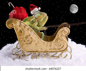 A veiled chameleon is delivering toys for Christmas in a sleigh.