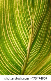 Veins, petiole, midrib, small netted veins and blade that support the form and function of a leaf