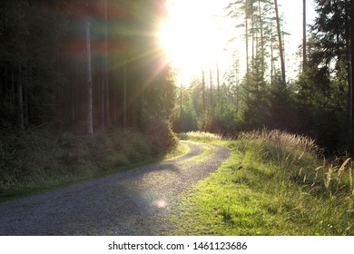 Veldensteiner Forst, Franconian Switzerland/Hersbrucker Alb, Bavaria: romantic forest road with setting sun lighting and visible sun flare. Selective focus.