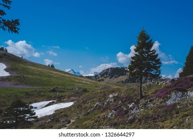 Velika Planina Mountain Slovenia
