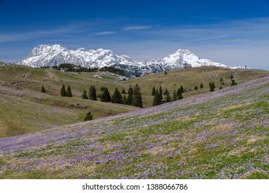 Velika planina mountain view in spring