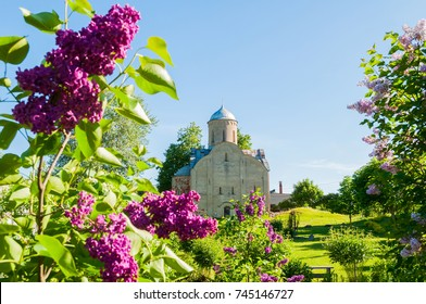 Veliky Novgorod, Russia. Medieval Orthodox church of Peter and Paul at Slavna framed by lilac trees in Veliky Novgorod, Russia. Selective focus at the church