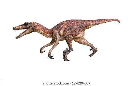 Velociraptor is a carnivore genus of Dromaeosaurid theropod dinosaur that lived on the Cretaceous Period isolated on white background with clipping path