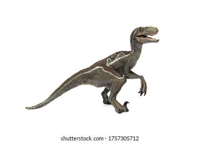 Velociraptor is carnivorous dinosaur isolated on white background.