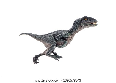 Velociraptor  ,dinosaur on white background  .
