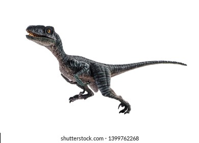 Velociraptor Imagenes Fotos De Stock Y Vectores Shutterstock This small, sleek dinosaur has vicious, snapping jaws and feet that end in large talons for gutting prey. https www shutterstock com es image photo velociraptor dinosaur on white background 1399762268
