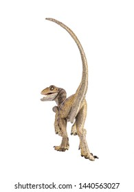 Velociraptor Dinosaur on white background .