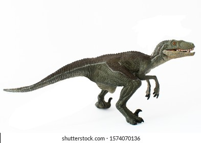 Velociraptor ready to attack isolated on white background. Velociraptor is a carnivorous dinosaur lived in the Cretaceous