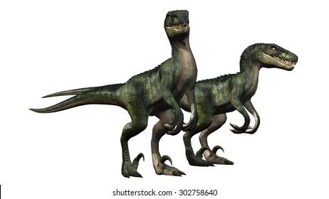 velociraptors dinosaurs - isolated on white background