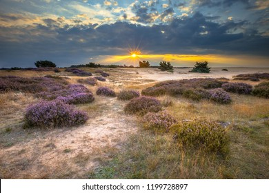 Veluwe Sunset over heathland with Heath (Calluna vulgaris) in Natura 2000 nature reserve Hoge Veluwe, Netherlands