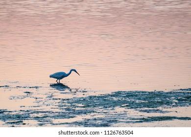 Vendicari Saline bird reserve retreat at sunset