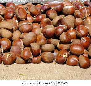 A vendor sells sprouting chestnuts outdoors