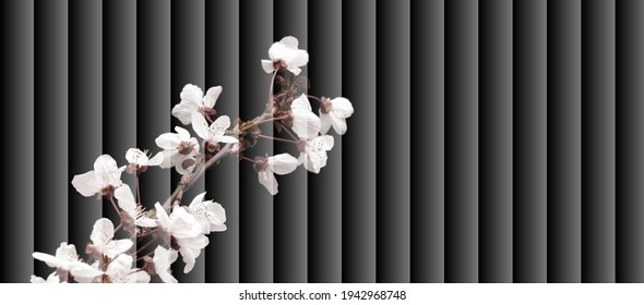 Venetian blind effect,  Photos of fruit flowers on decorative frame, blind decorated with fruit flowers, almond blossom, pruno flower, cherry blossom, close up, macro,   for advertising