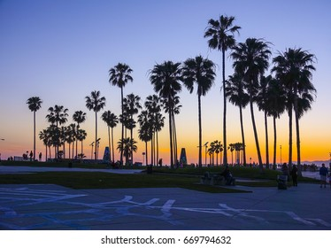 Venice Beach after sunset - silhouettes of Palm Trees