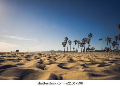 Venice Beach / Sand and palms