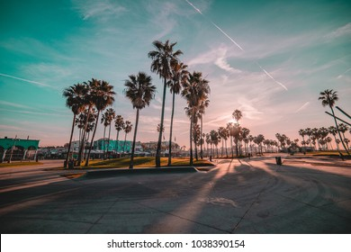 Venice beach sunrise palm trees