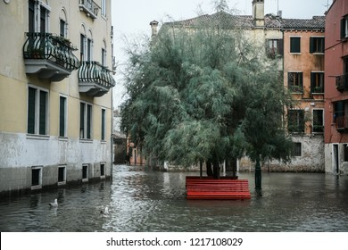 Venice, Italy - 29 October 2018: A red bench and a tree are submerged by water during exceptional Acqua Alta - High Tide Floods. 70% of the lagoon city has been flooded by waters rising 149 cm