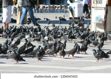 Venice, Piazza San Marco with pigeons, tourists, and birdseed vendors