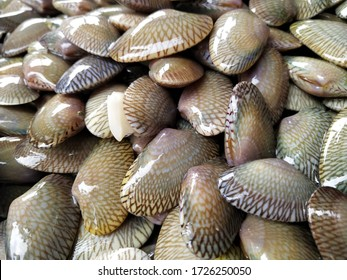 Venus shell) is a two-shelled sea shell that is popular to catch.  And taken orally  Because the clams are sweet and tender  Also cheap  Fishermen can catch easily.