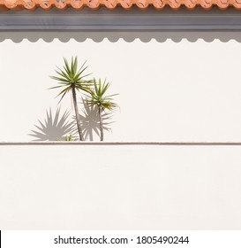 Veranda in rural Portugal. Palm trees and orange roof tiles casting shadows on wall. Minimalist background.