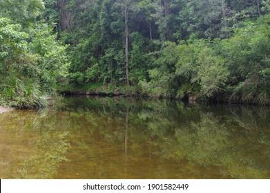 Verdant Swimming Hole Little Yabba Creek Kenilworth