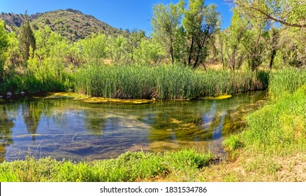 The Verde River just west of Stewart Ranch in the Upper Verde River Wildlife Area. This section of the river is being fed by underground Springs.