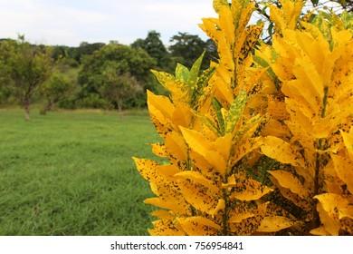 Verde y Amarillo al Natural