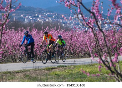 Veria, Greece - March 17 2019: Cycling on the flowering peach trees in the Veria Plain, organized for the third time by the Veria Touristic Club.