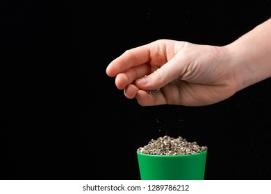 Vermiculite in the hands of a man. Close up. Soil growing cannabis. A mixture of earth, perlite and vermiculite.