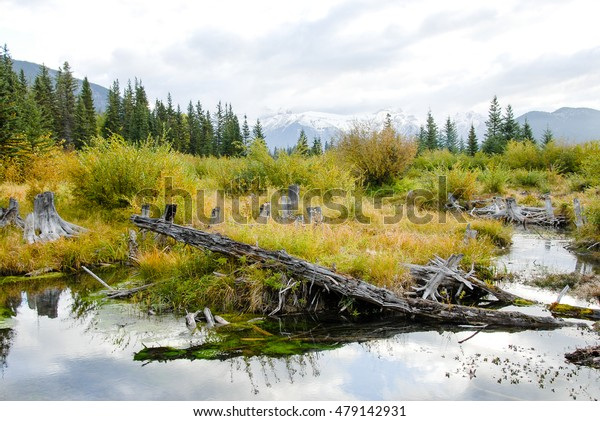 Vermilion Lake and Mountain Range in the Morning in Autumn, Banff National Park, Canadian Rockies