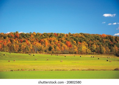 Vermont field fall foliage